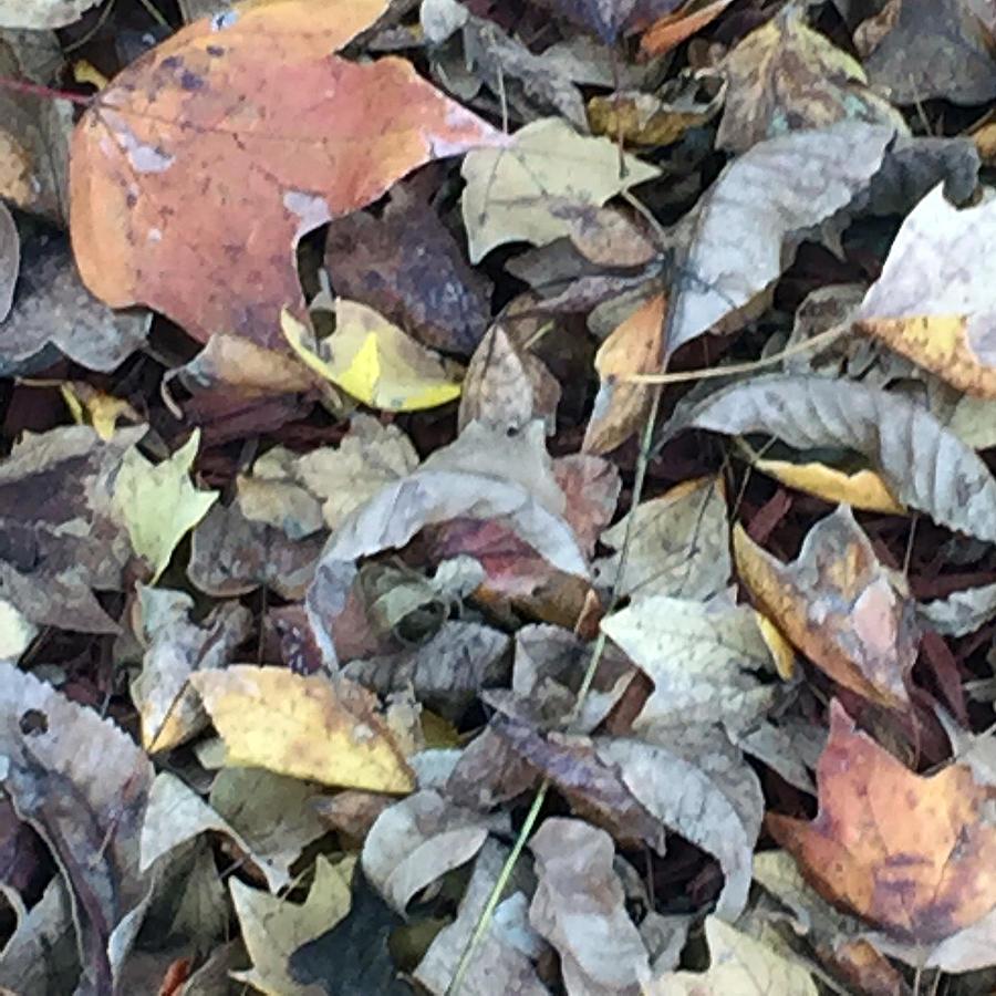 Autumn Leaves Photograph - Autumn Carpet by James Pinkerton