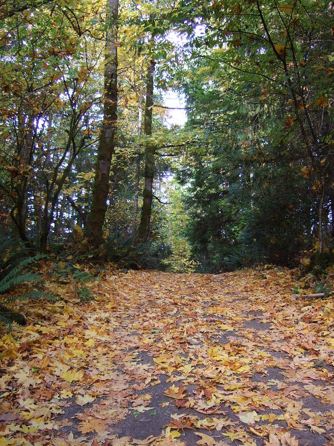 Leaves Photograph - Autumn Carpet by Ruth Stromswold