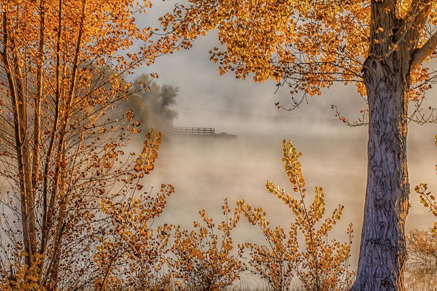 Autumn Color And Fog Photograph