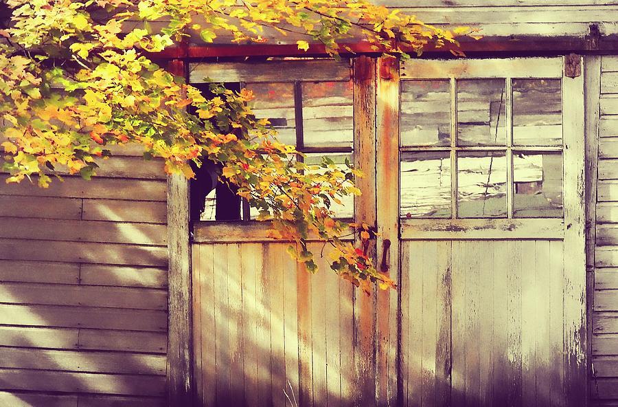 Autumn Photograph - Autumn Color by JAMART Photography