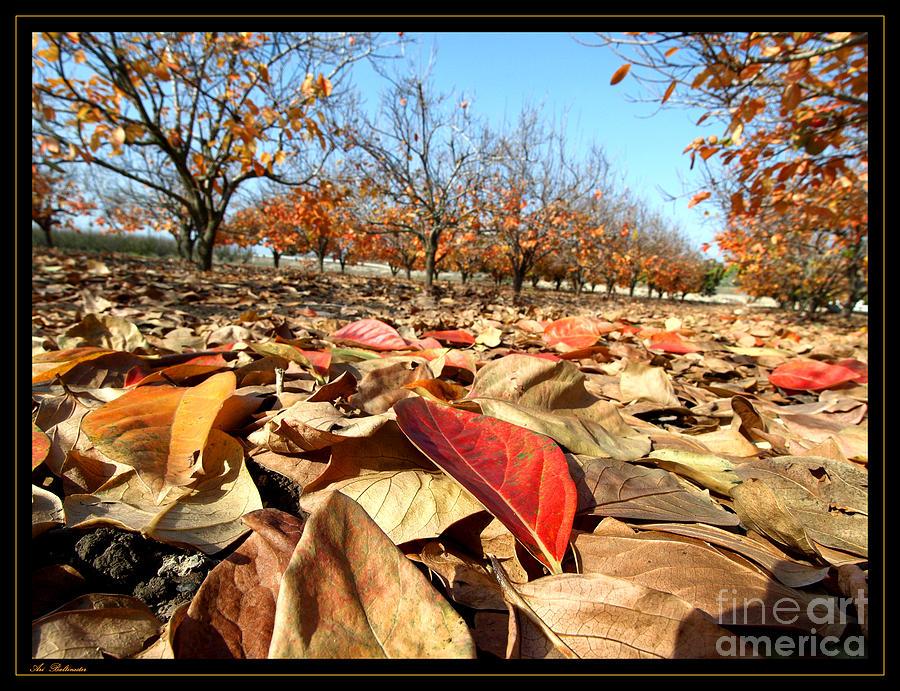 Autumn Photograph - Autumn Colors 04 by Arik Baltinester