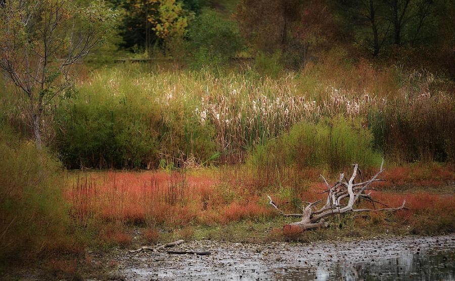 Autumn Colors 26 Photograph by Scott Fracasso