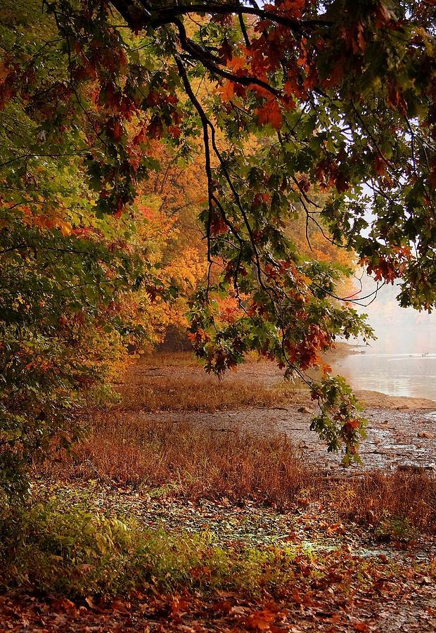 Field Photograph - Autumn Colors 37 by Scott Fracasso