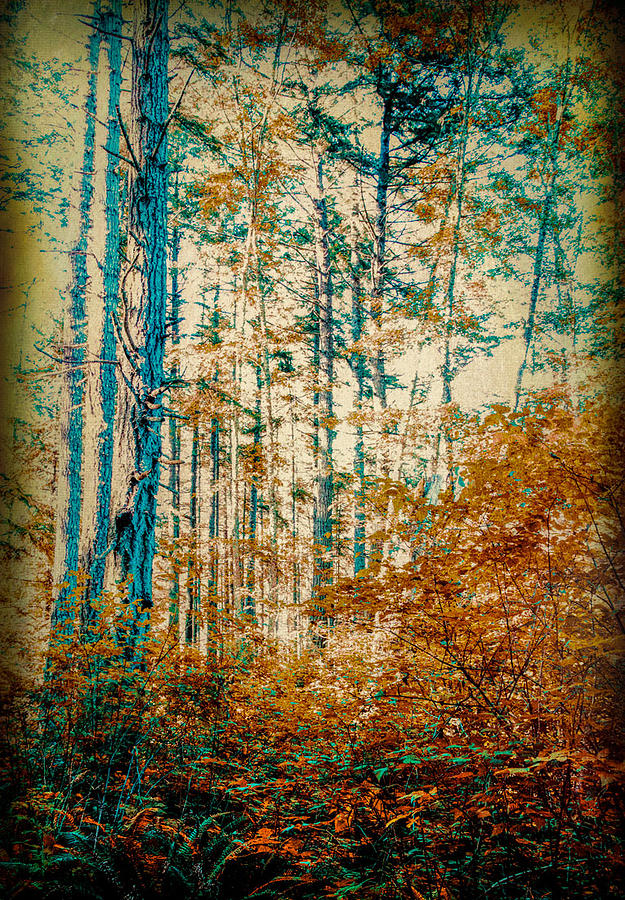 Autumn Colors by Barry Weiss