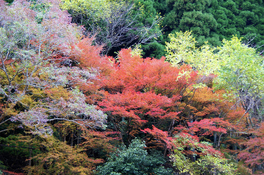 Horizontal Photograph - Autumn Colors by Demerval Arruda, Jr.