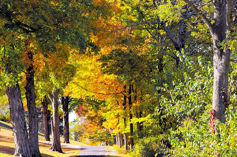 Autumn Colors In Ohio Photograph