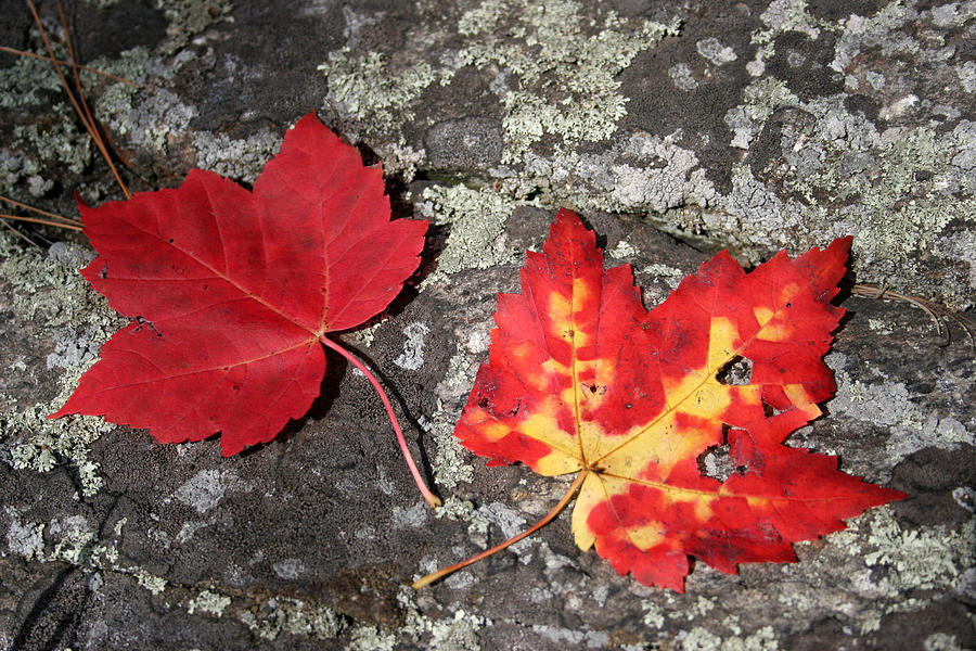 Tranquility Photograph - Autumn Colors by Kate  Leikin