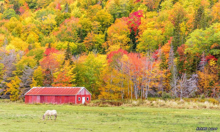 Cape Breton Photograph - Autumn Colors Near Lake Ainslie  by Ken Morris