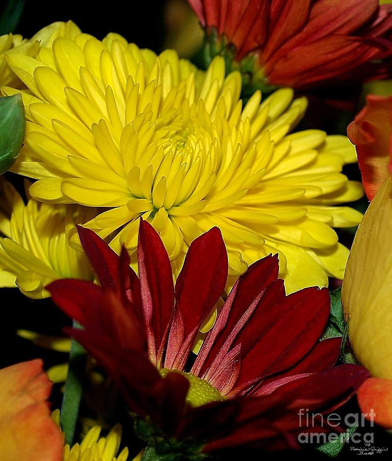 Chrysanthemum Photography Photograph - Autumn Colors by Patricia Griffin Brett