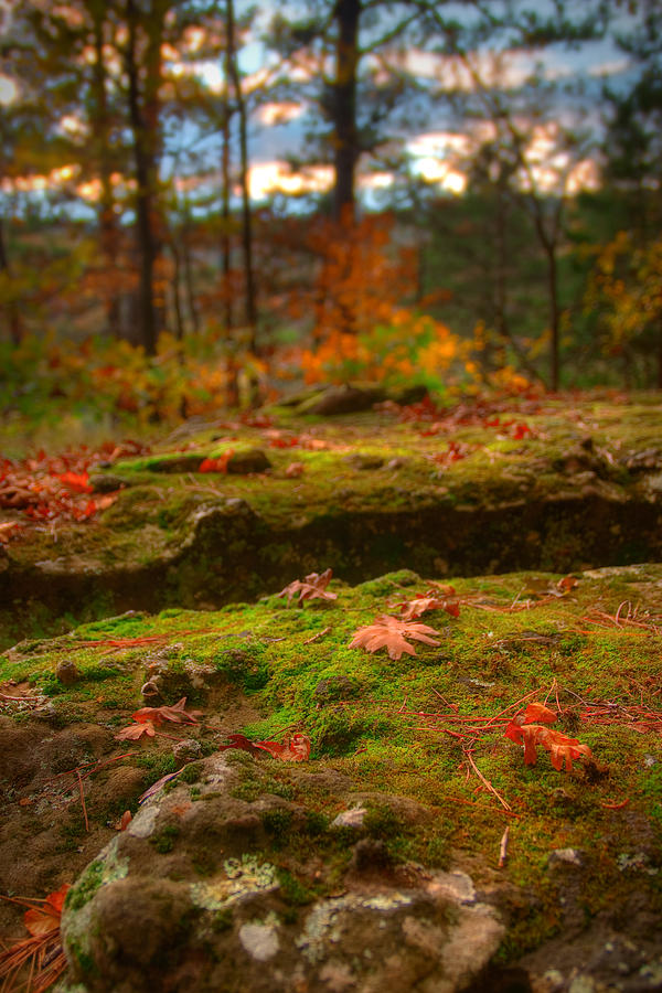 Landscape Photograph - Autumn Colors by Ryan Heffron