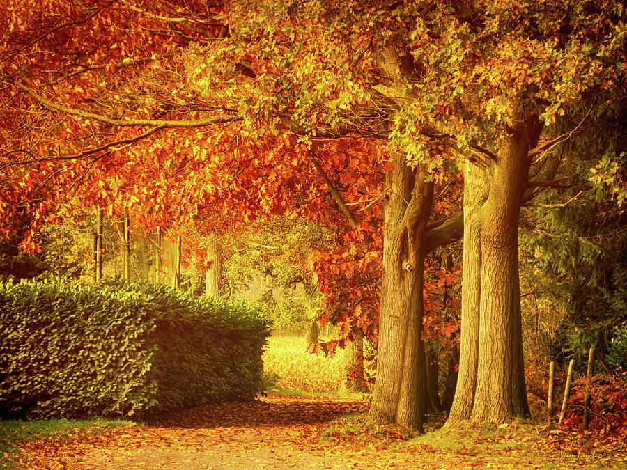 Autumn Photograph - Autumn Colors by Wim Lanclus