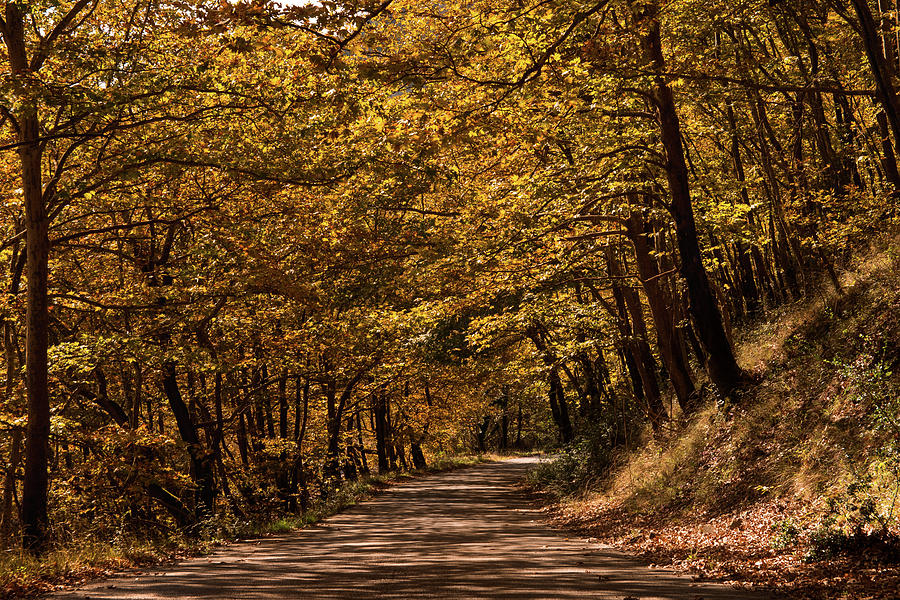 Landscape Photograph - Autumn Colours by Nikos Stavrakas