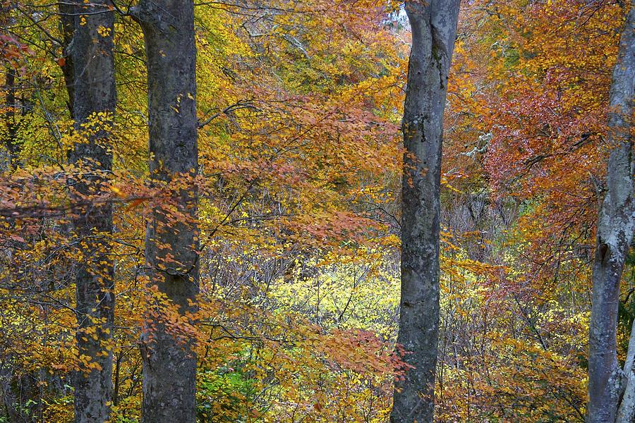 Fall Photograph - Autumn Colours by Phil Crean