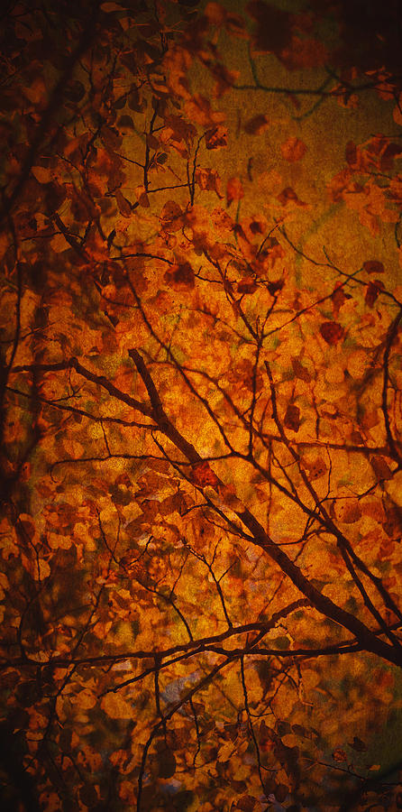 Fall Photograph - Autumn Colours by Stuart Deacon