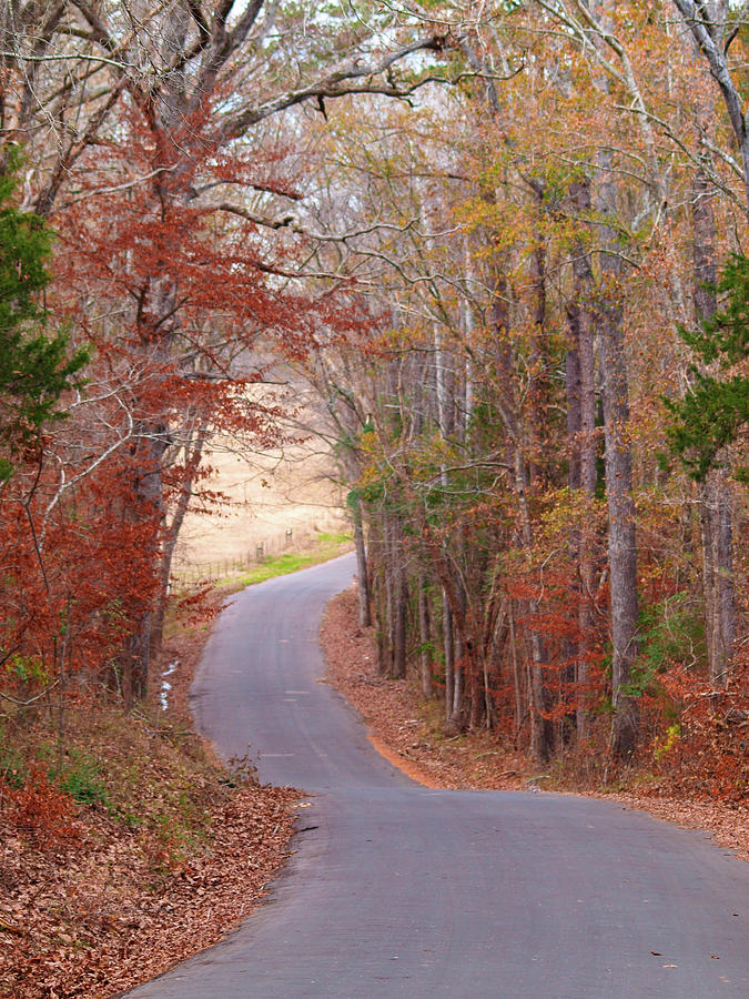 Tyler Photograph - Autumn Country Road by Lea Rhea Photography