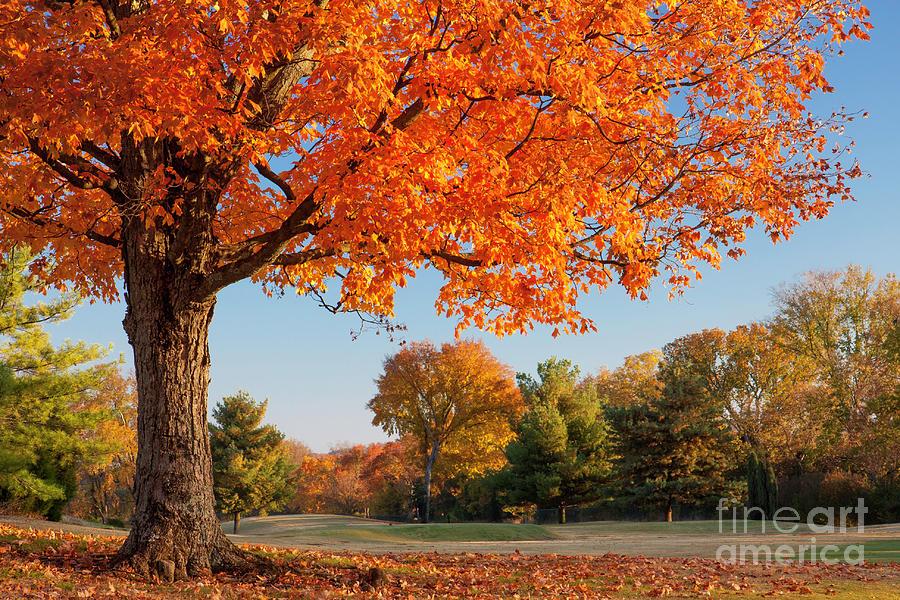 Autumn Photograph - Autumn Dawn by Brian Jannsen