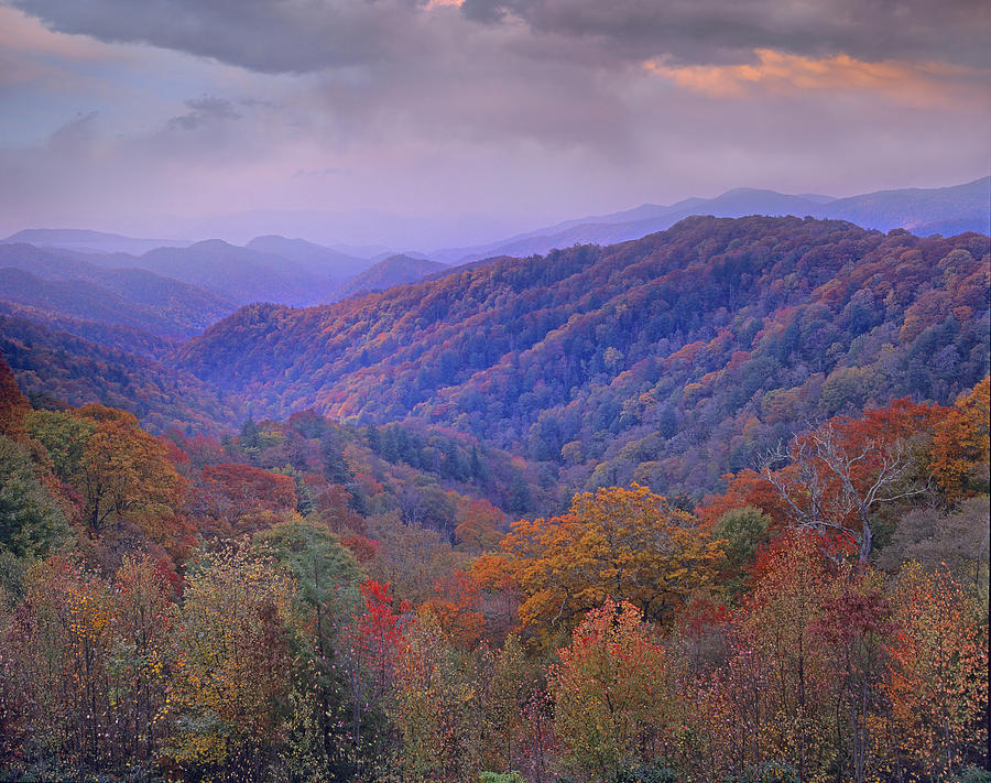 Tim Fitzharris Photograph - Autumn Deciduous Forest Great Smoky by Tim Fitzharris