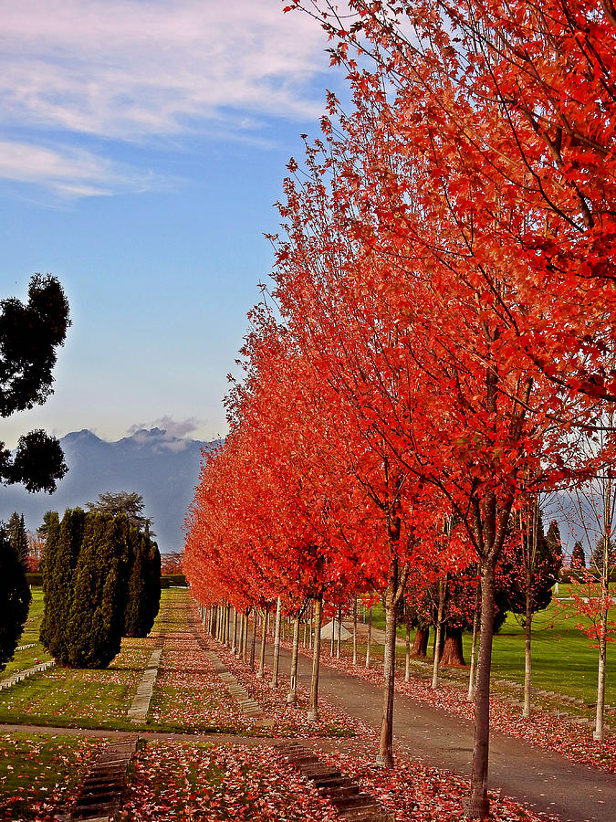 Autumn Photograph - Autumn Delight, Vancouver by Brian Chase