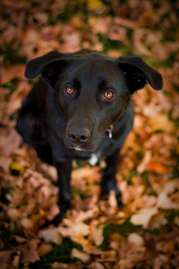 Animal Photograph - Autumn Dog by Adam Romanowicz