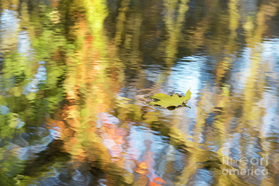 Acer Photograph - Autumn Drift by Tim Gainey