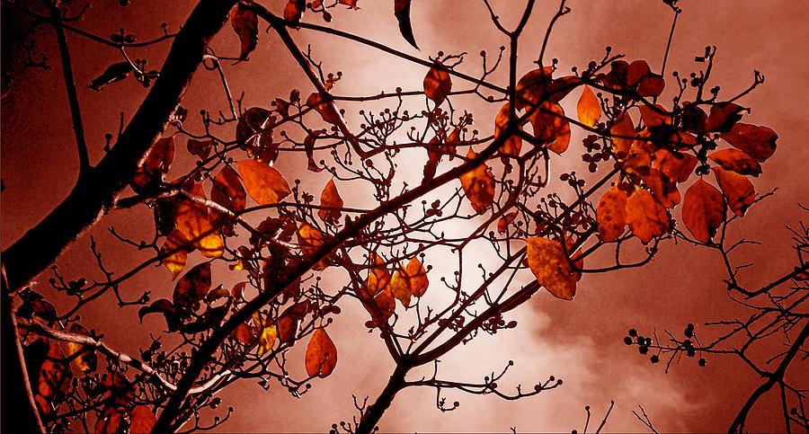 Autumn Photograph - Autumn Ends by Russ Mullen