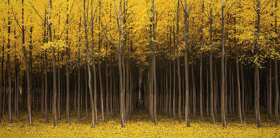 Autumn Fantasy by Bjorn Burton