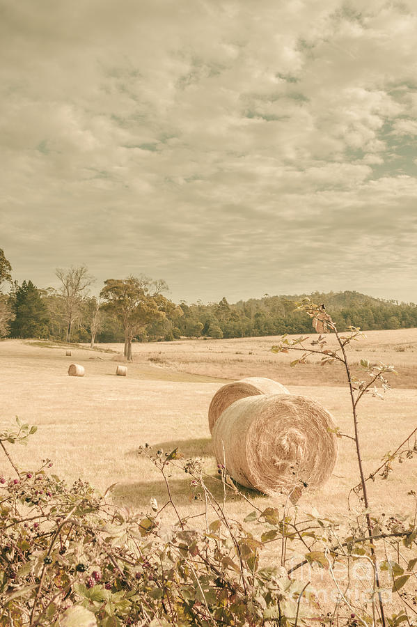 Farm Photograph - Autumn Farming And Agriculture Landscape by Jorgo Photography - Wall Art Gallery