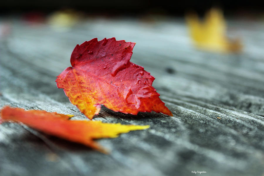 Leaves Photograph - Autumn Fire by Holly Carpenter