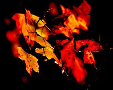 Autumn Photograph - Autumn Fire by Tom Dell
