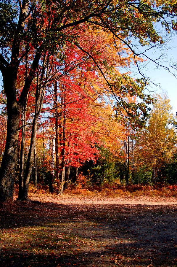 Trees Photograph - Autumn Flame by Jennifer Englehardt