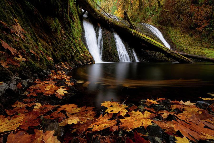 Autumn Flashback by Andrew Kumler