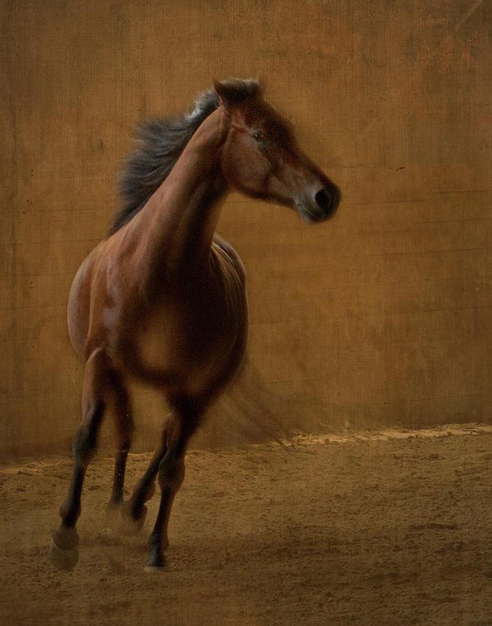 Horse Photograph - Autumn Flight by Eleszabeth McNeel