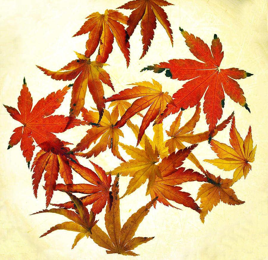 Autumn Photograph - Autumn Flury by Rebecca Cozart