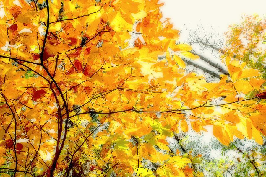 Fall Photograph - Autumn Flutter by John Mueller