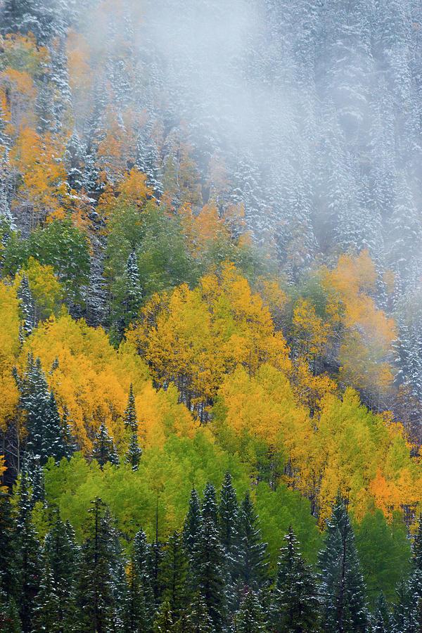Aspen Photograph - Autumn Fog And Snow by John De Bord