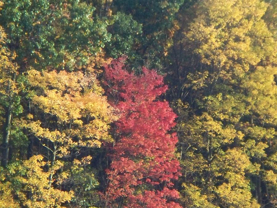 Autumn Photograph - Autumn Folliage by Rosanne Bartlett