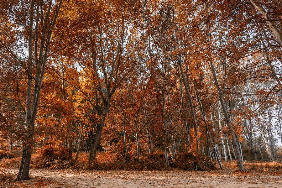 Scenic Photograph - Autumn Forest by Ioannis Vasilakakis