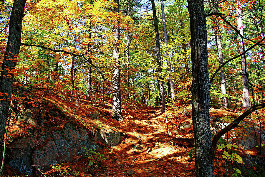 Autumn Forest Killarney by Debbie Oppermann