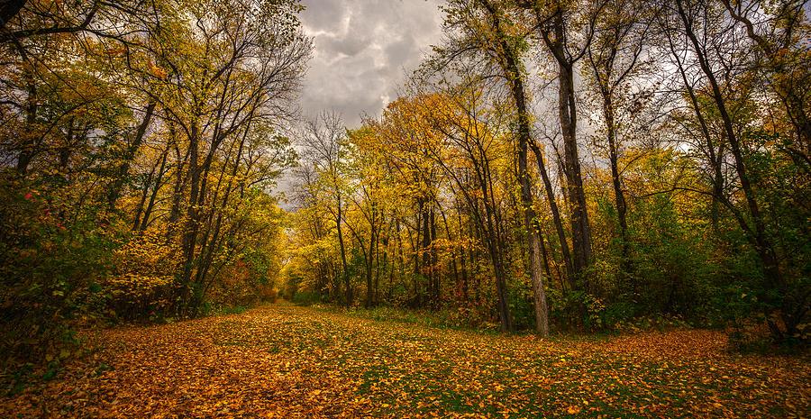 Leafs Photograph - Autumn Forest by Stuart Deacon