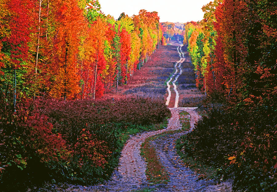 Michigan Photograph - Autumn Forest Track by Dennis Cox