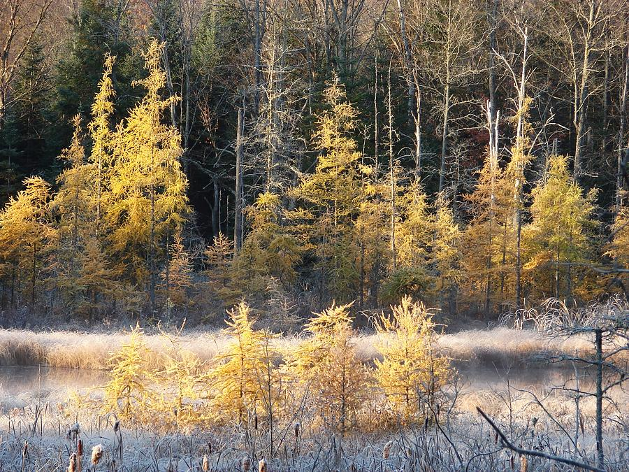 Autumn Frost Photograph