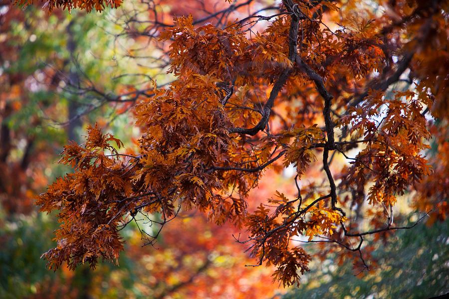 Nature Photograph - Autumn Fury by Jane Melgaard