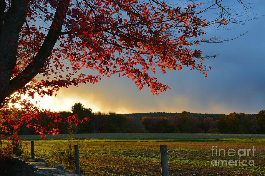 Autumn Glow by Tammie Miller