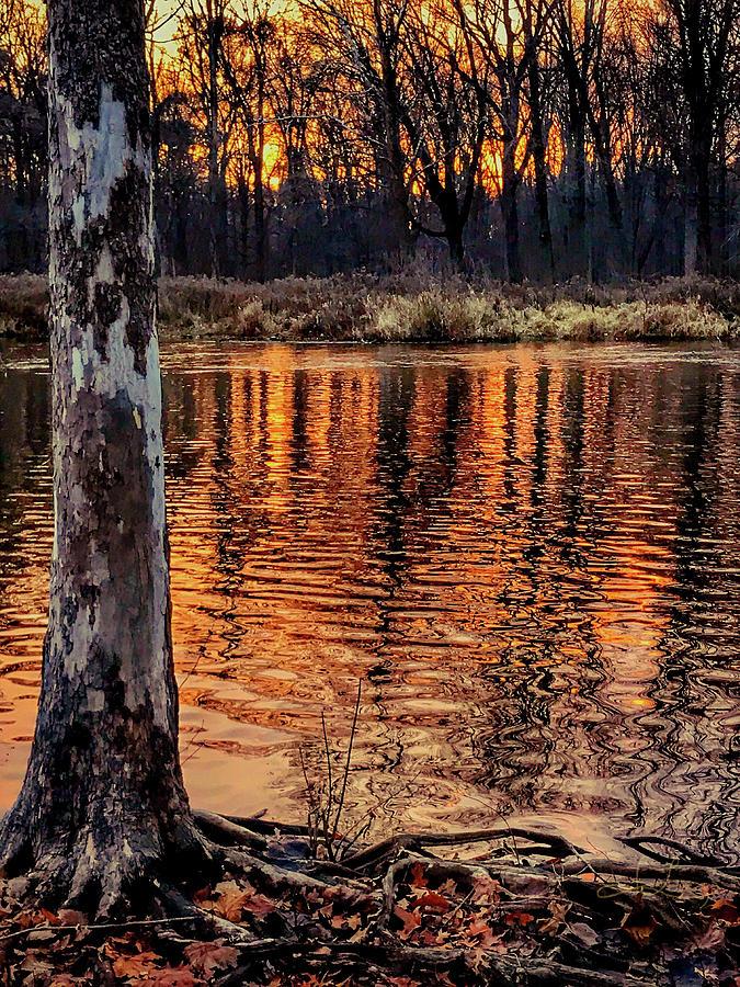 Autumn Gold by Jill Love Photo Art