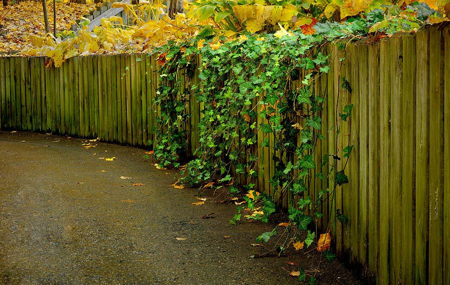 Gree Photograph - Autumn Green-0090 by Sean Shaw