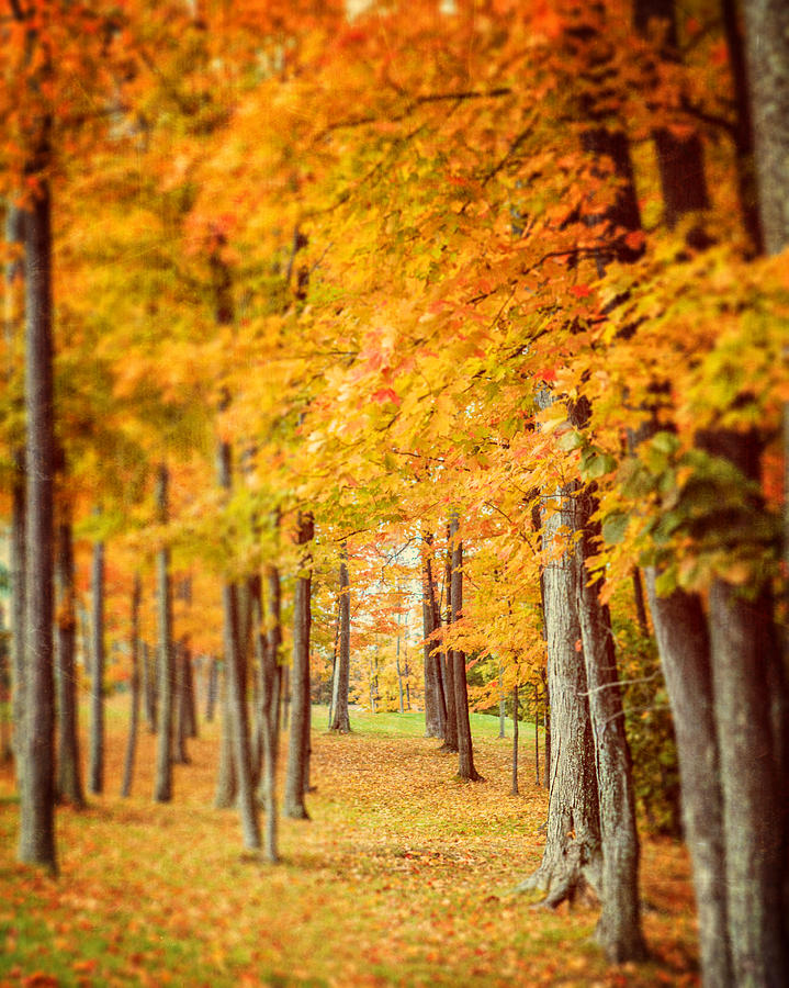 Autumn Landscape Photograph - Autumn Grove  by Lisa Russo