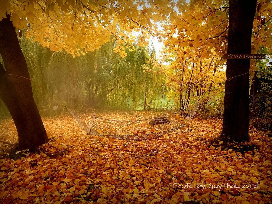 Autumn Hammock  by Guy Hoffman