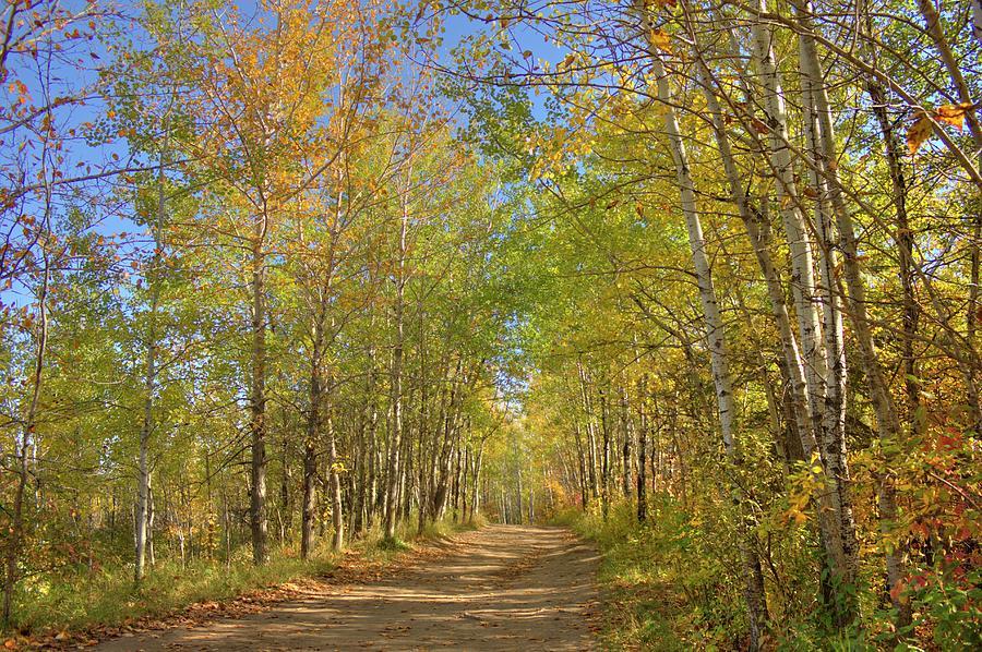 Autumn Hike by Jim Sauchyn