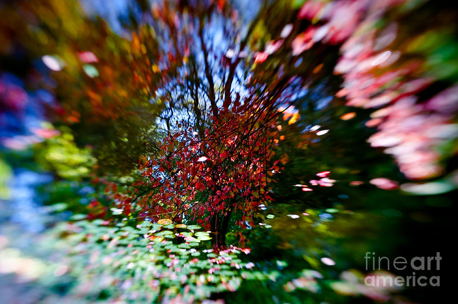 Abstract Photograph - Autumn Impressions 2 by Venetta Archer
