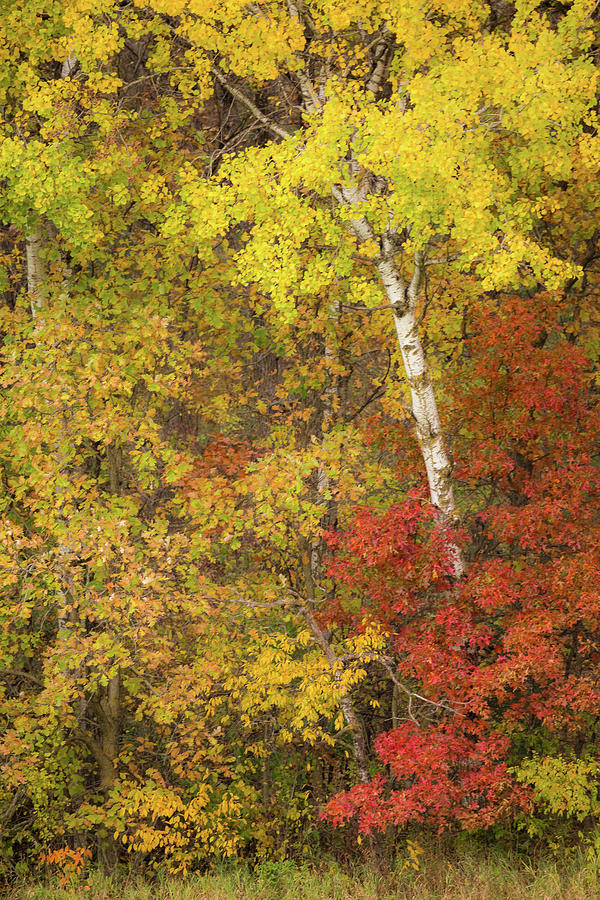 Autumn Photograph - Autumn Impressions by Penny Meyers